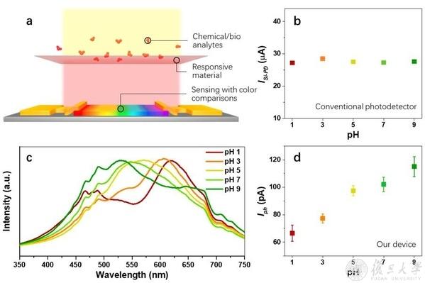 图3. 基于带隙递变钙钛矿器件的化学/生物传感器结构示意图,及其对溶液pH值的探测功能展示